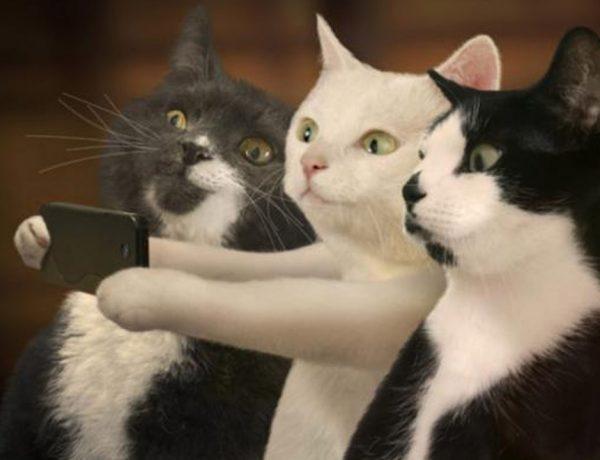 Snapchat ahora reconoce a tu gato