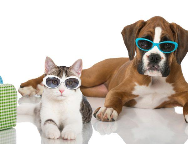 vacaciones mascotas