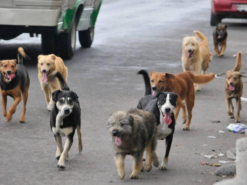 La encuesta reveló los nombres y las razas más populares de perros en el país