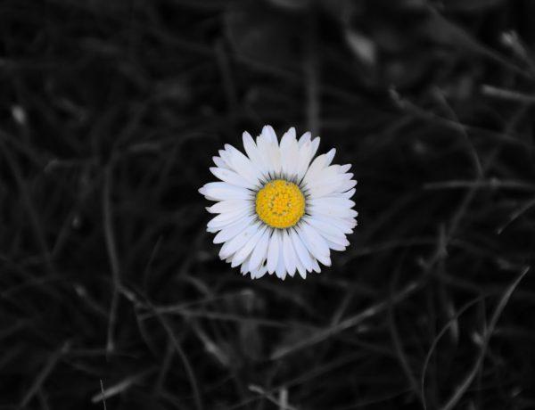 primavera equinoccio