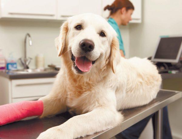 Nuestras mascotas son lo más importante, y su cuidado nos interesa. Pon atención: