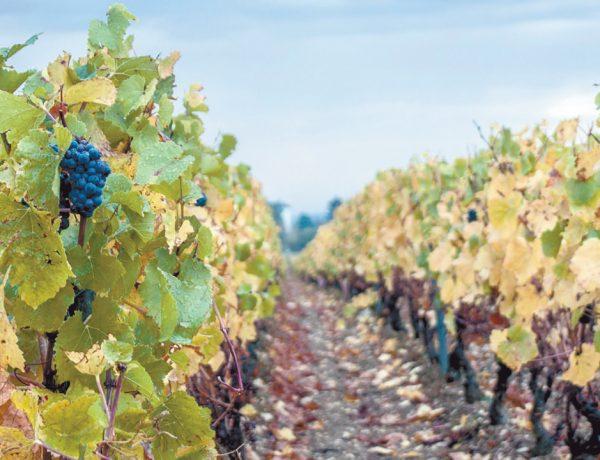 Argentina es un país cuya geografía ha favorecido la producción de algunos de los mejores vinos