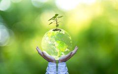 Medio ambiente dia