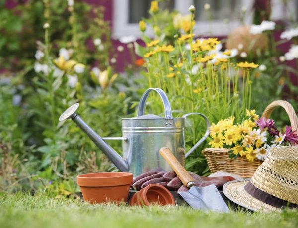 cuida-tu-jardin-en-verano