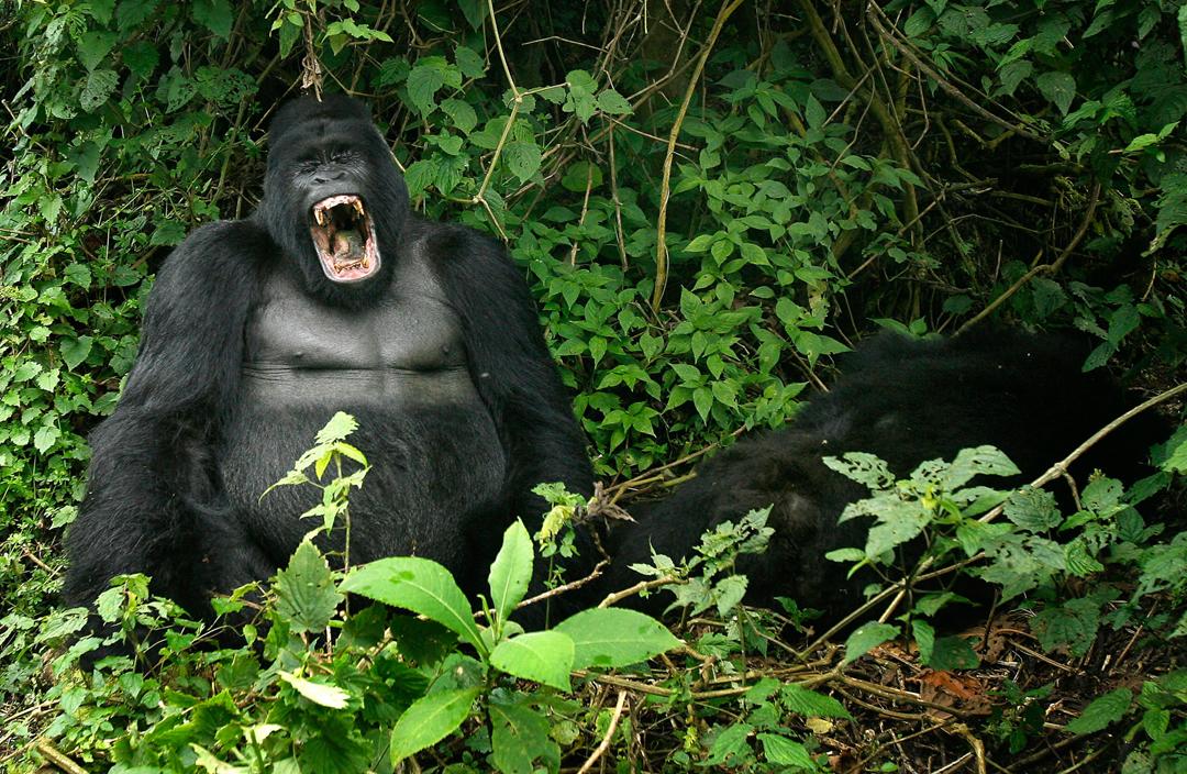 viajes Virunga-República-Democrática-del-Congo