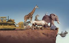 extincion animales