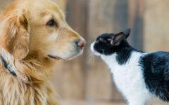 perro o gato ¿qué prefieres?