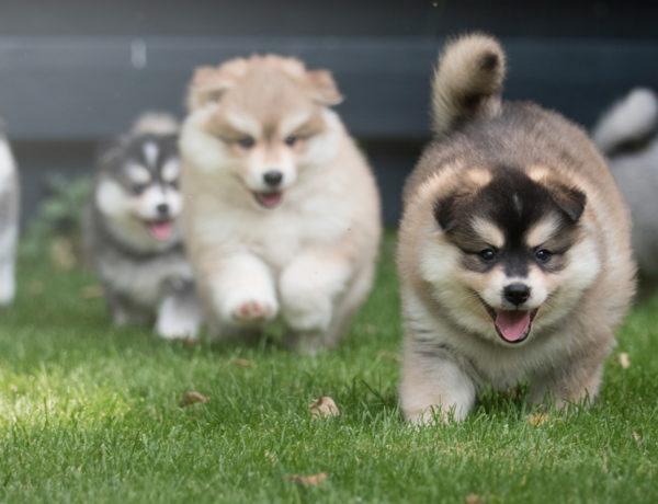 La moda permea cada aspecto de la vida cotidiana. Incluso podemos decir que ciertas razas de perro se encuentran en la cúspide.