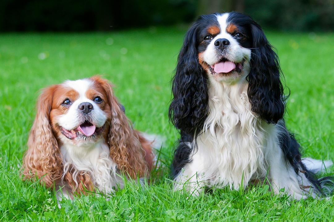 La moda permea cada aspecto de la vida cotidiana. Incluso podemos decir que ciertos perros se encuentran en la cúspide.