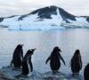 Los animales no logran adaptarse al desenfrenado paso veloz del cambio climático. Es momento de hacer algo.