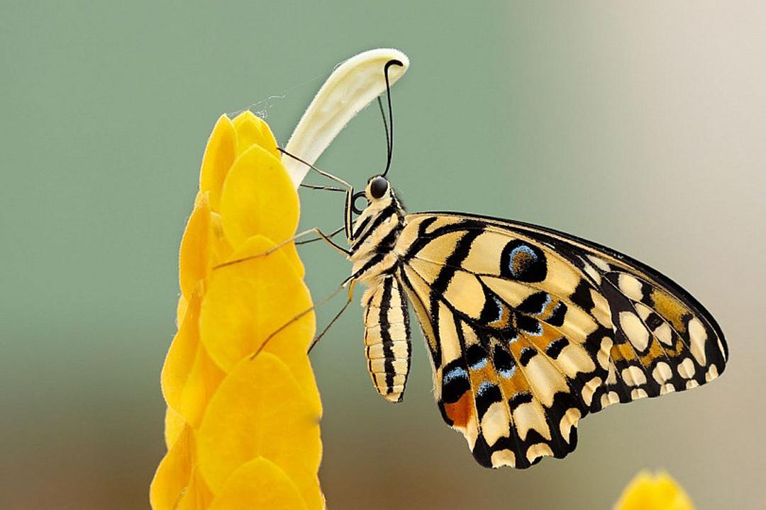 consejos-fotografiar-insectos-macro-macrofotografia-bichos-mariposa-belleza-810x540