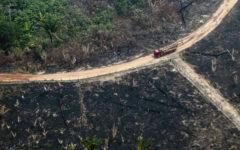 Leonardo DiCaprio, el G-7 y un millonario suizo otorgan donativos para salvar el Amazonas