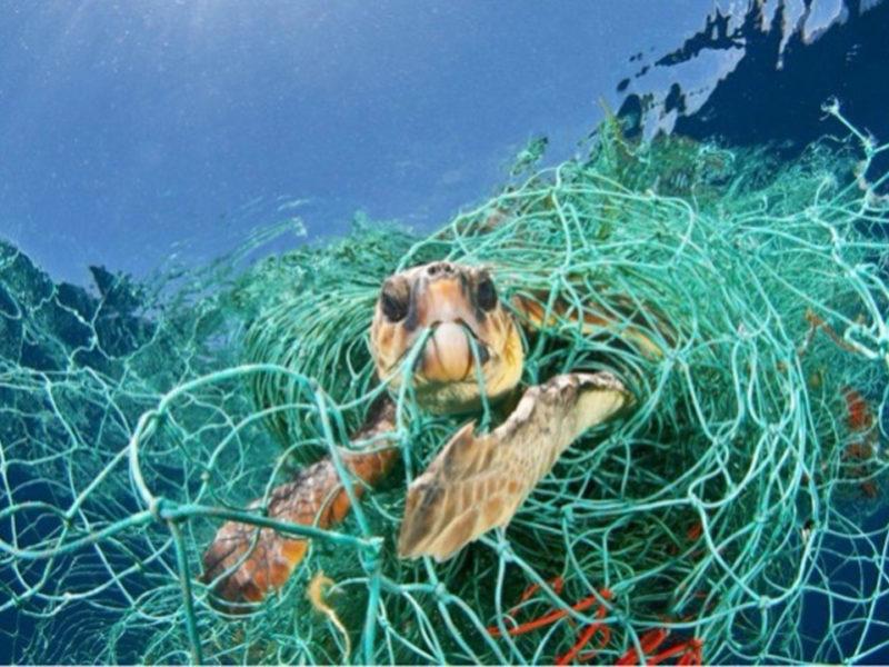 Proteccion oceanos