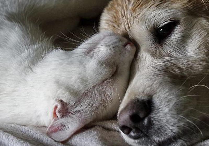Còmo cuidar mascotas viejas