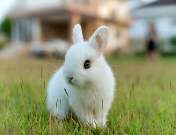 Proteccion mascotas conejo
