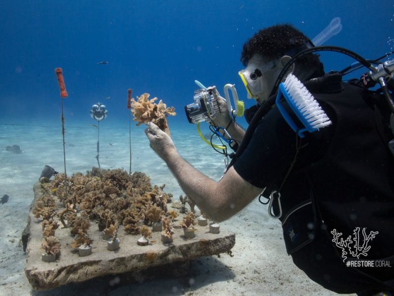 corales-cozumel
