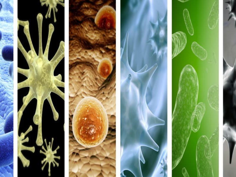 pandemias en la historia