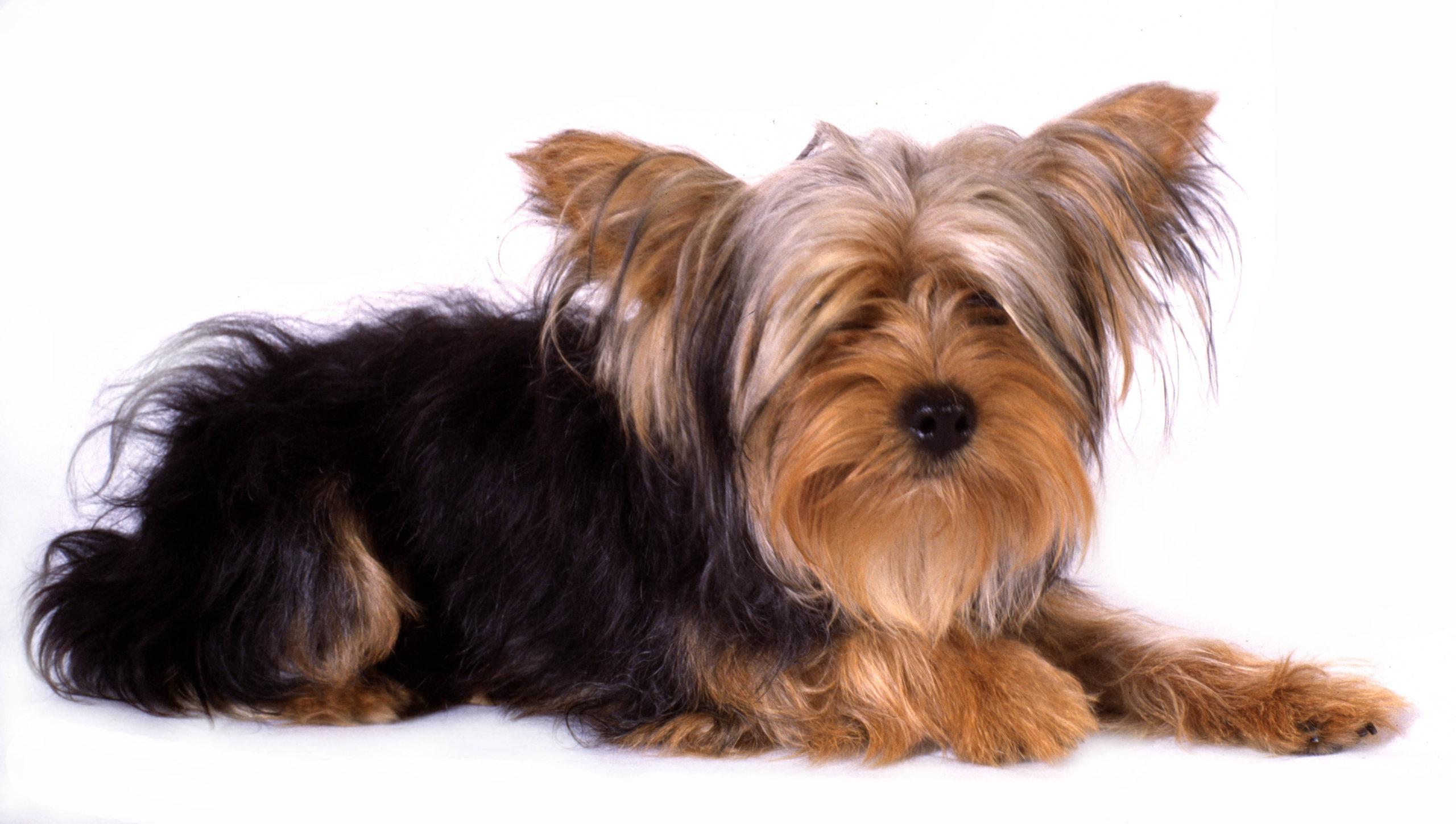 Mascotas pueden contagiarse de Covid-19