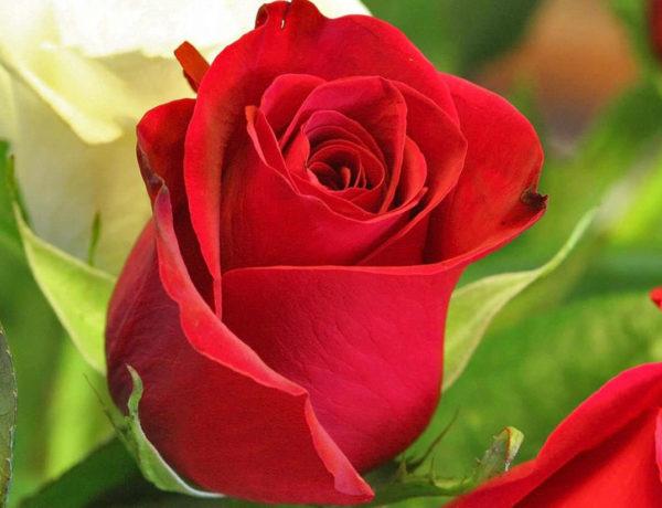 flores de la buena suerte