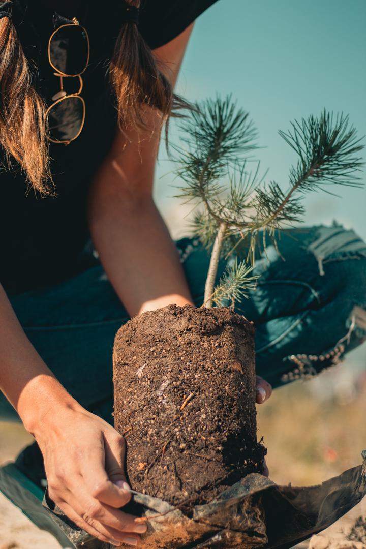 Desde el 2012, se trabaja para concientizar a la población sobre la importancia de reforestar.