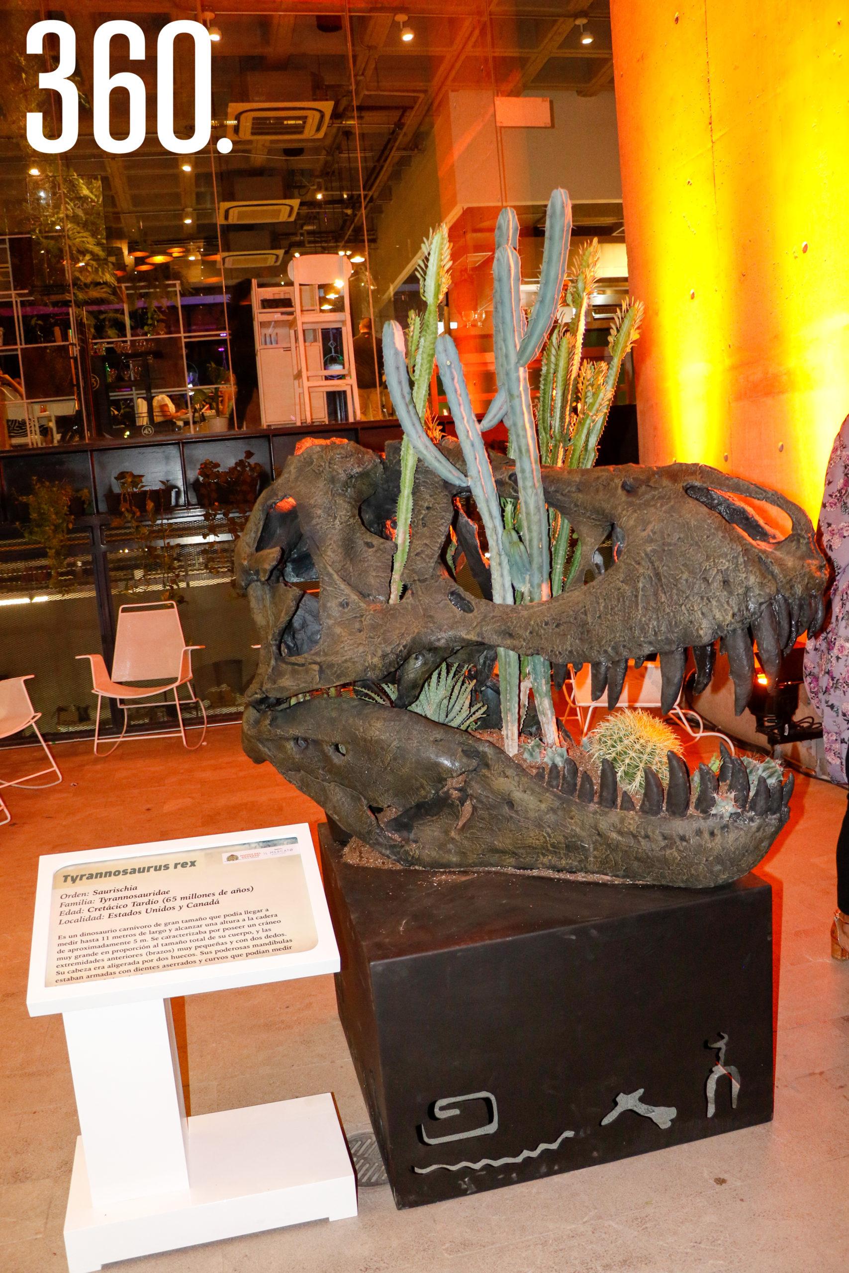 Réplicas de cabezas de dinosaurios donadas por el Museo del Desierto.